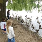 geese and ducks by the lake at the nature discovery centre