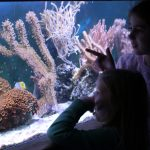 chessington sea life