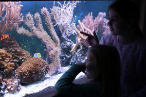 chessington sea life