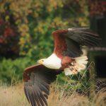 bird of prey display 1