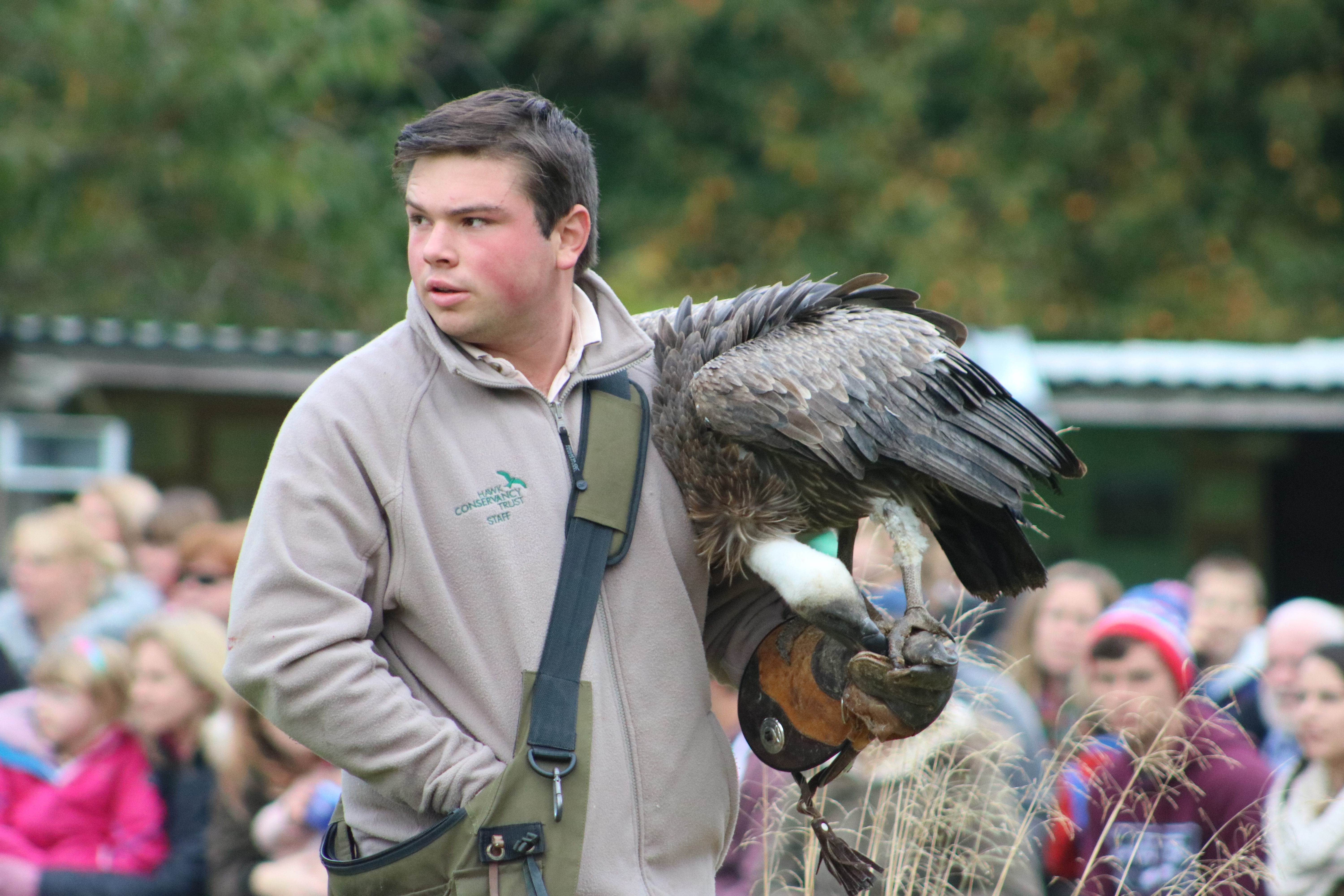 keeper with vulture during display