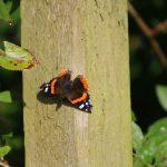 butterly on wooden post