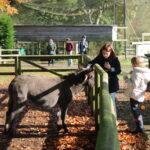 stroking the donkey