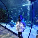 ocean tunnel at Alton Towers sea life centre
