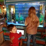 Fish tank in the Splash Lnadings Hotel at Alton Towers
