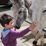 island farm donkey sanctuary