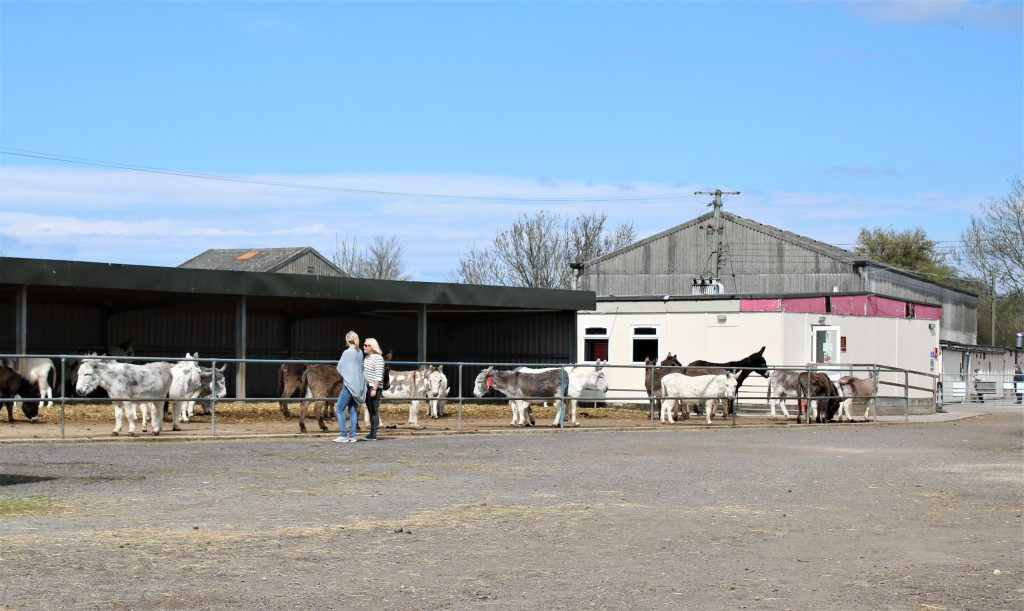stableyard at Island Farm Donkey Sanctuary