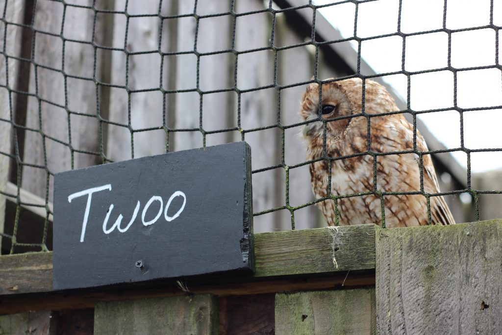 owl called Twoo