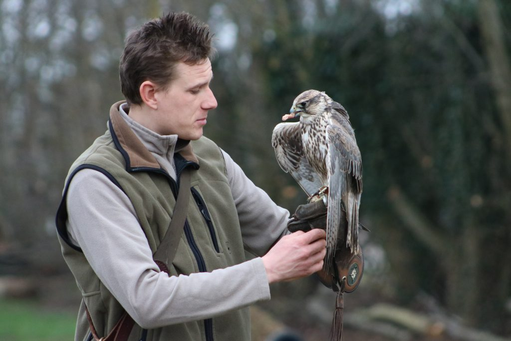owl on handlers arm at millets falconry centre