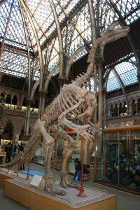 Skeleton at Natural History Museum Tring