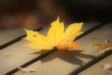 golden autumn leaf