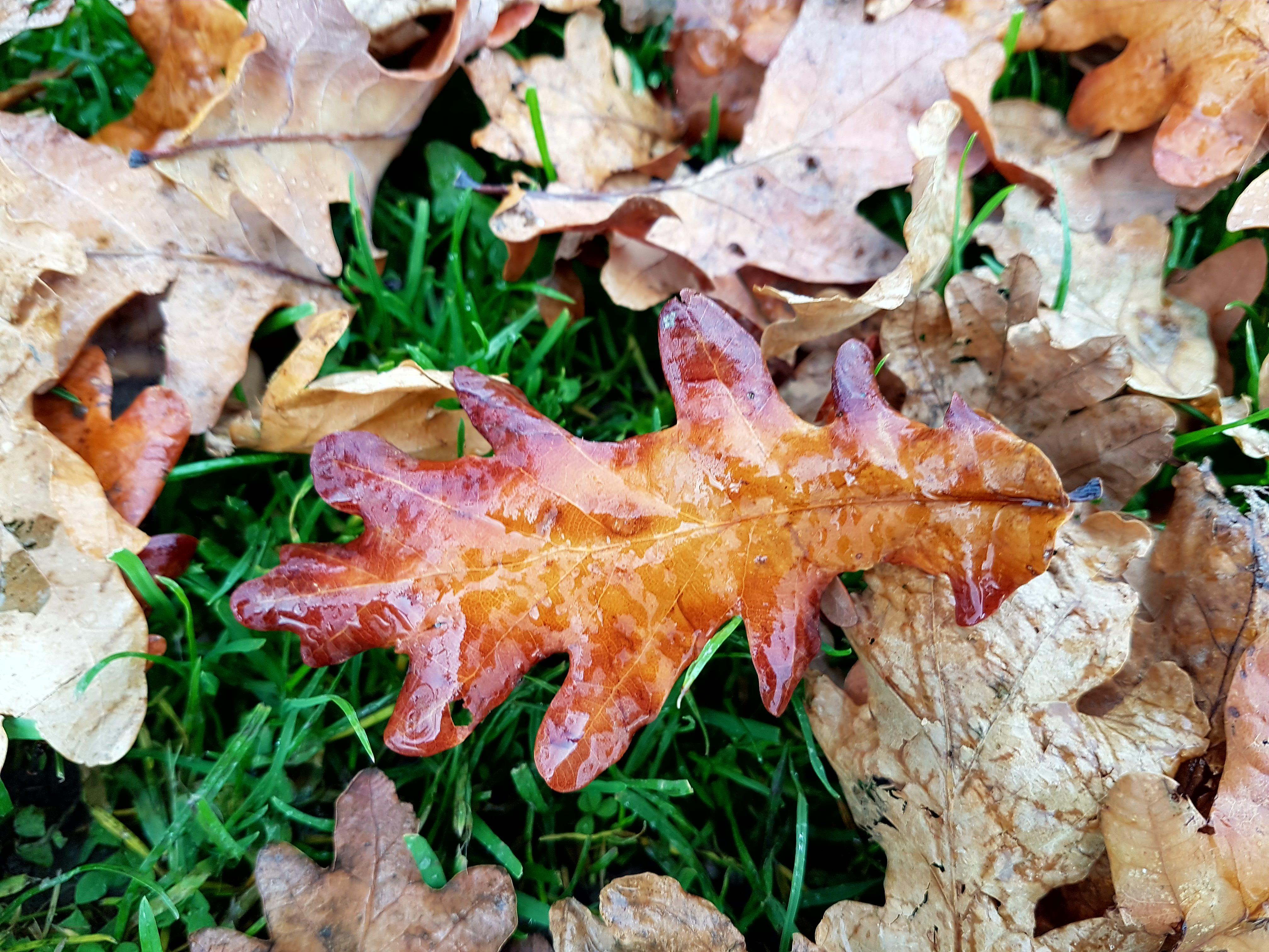 Wet autumn leaf in the rain