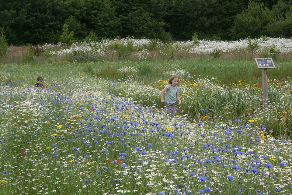 wildflower garden at the garlic farm