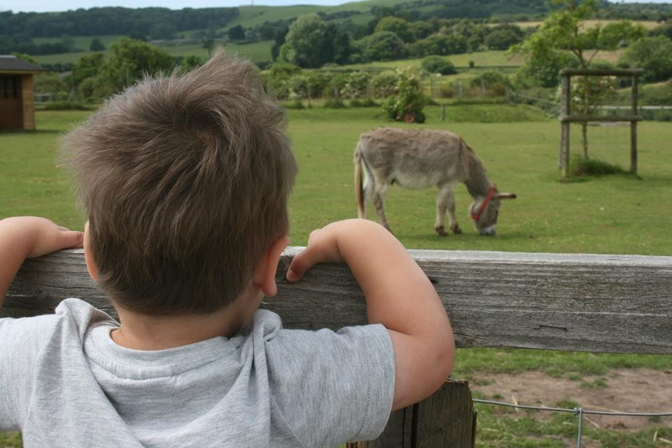 donkey in the field at isle of wight donkey sanctuary