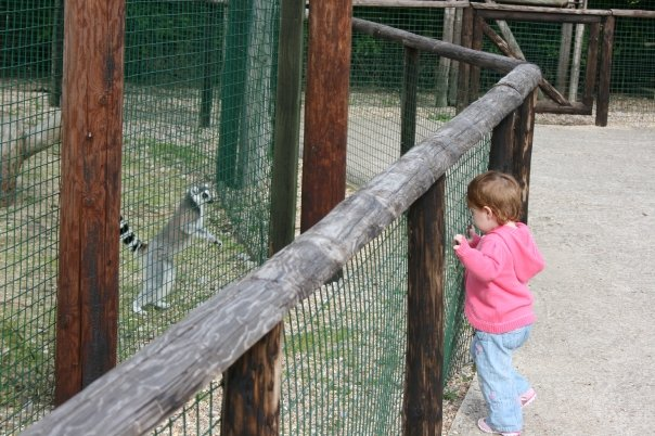 Lemur enclosure at the Isle Of WIght Zoo