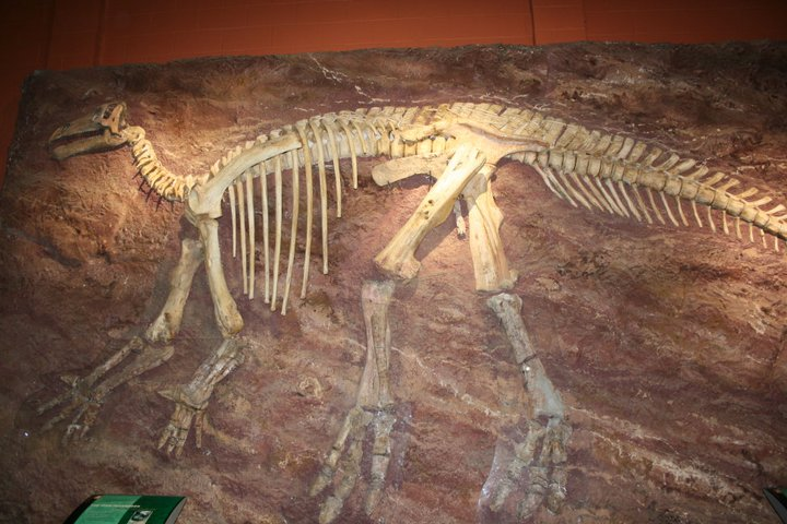 dinosaur skeleton at dinosaur isle