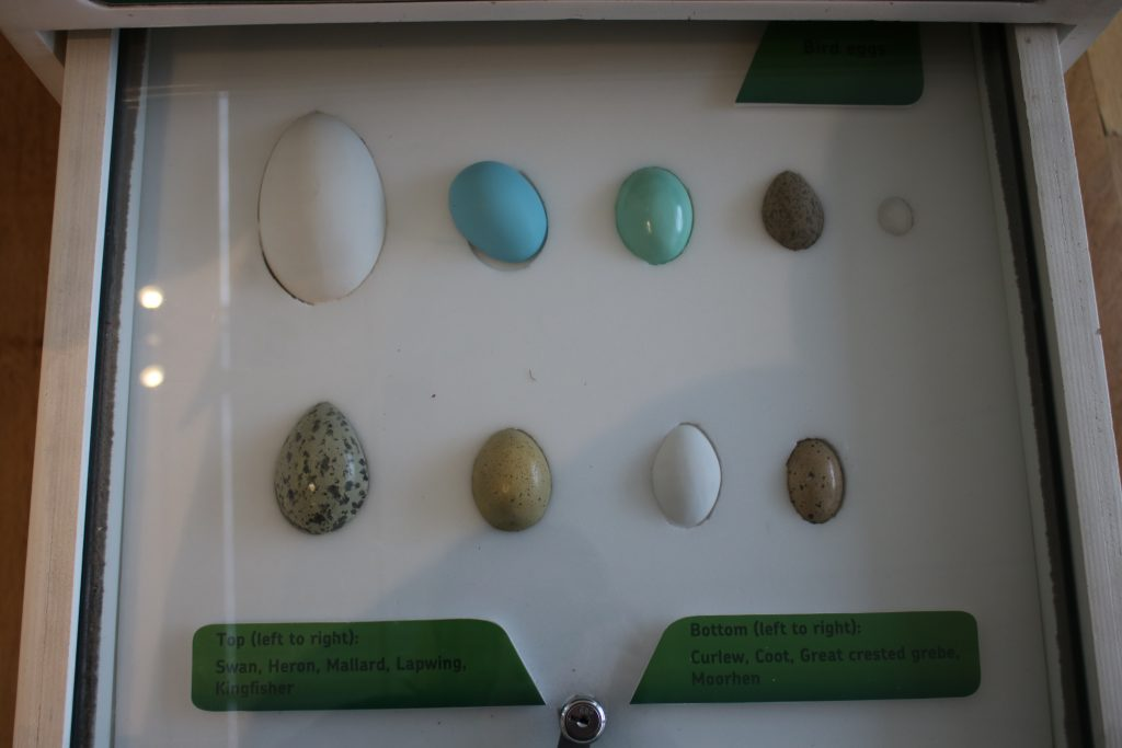 River bird eggs