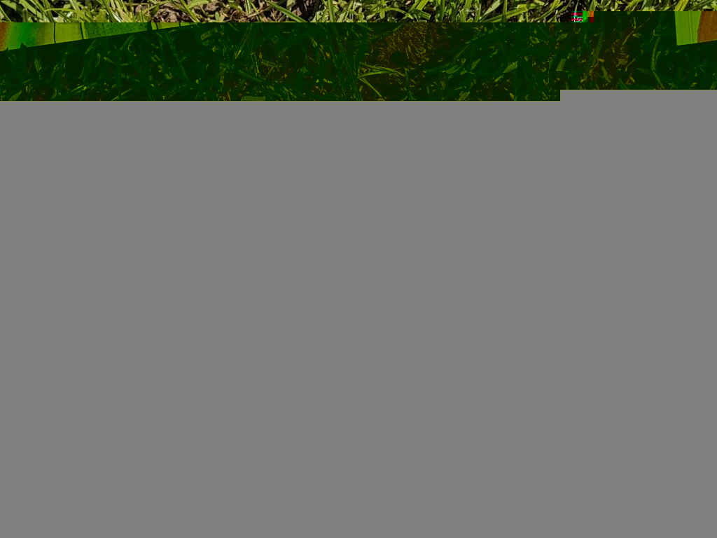 The Rainbow Gnome boom