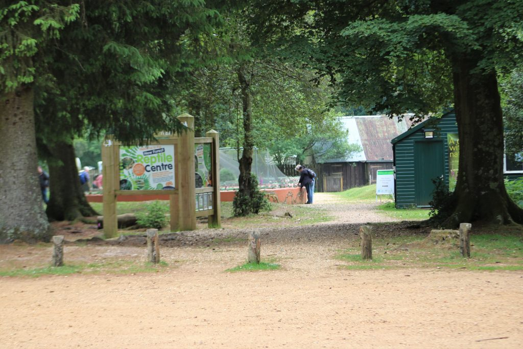 visitors at new forest reptile centre