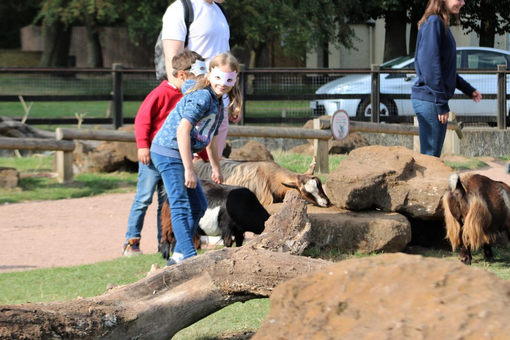 Hullabazoo farm petting area. Kids stroking the goats