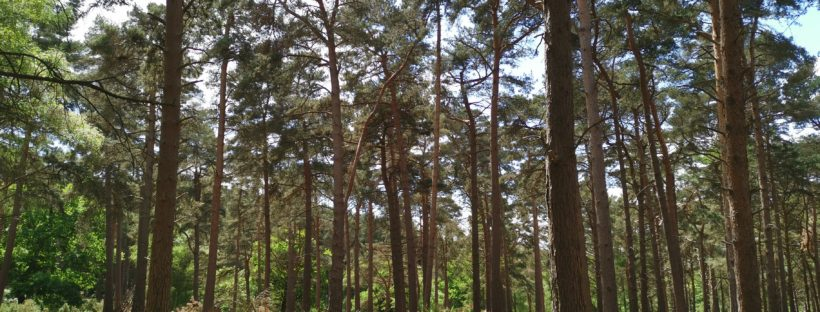 Trees at Rushmere coutry park