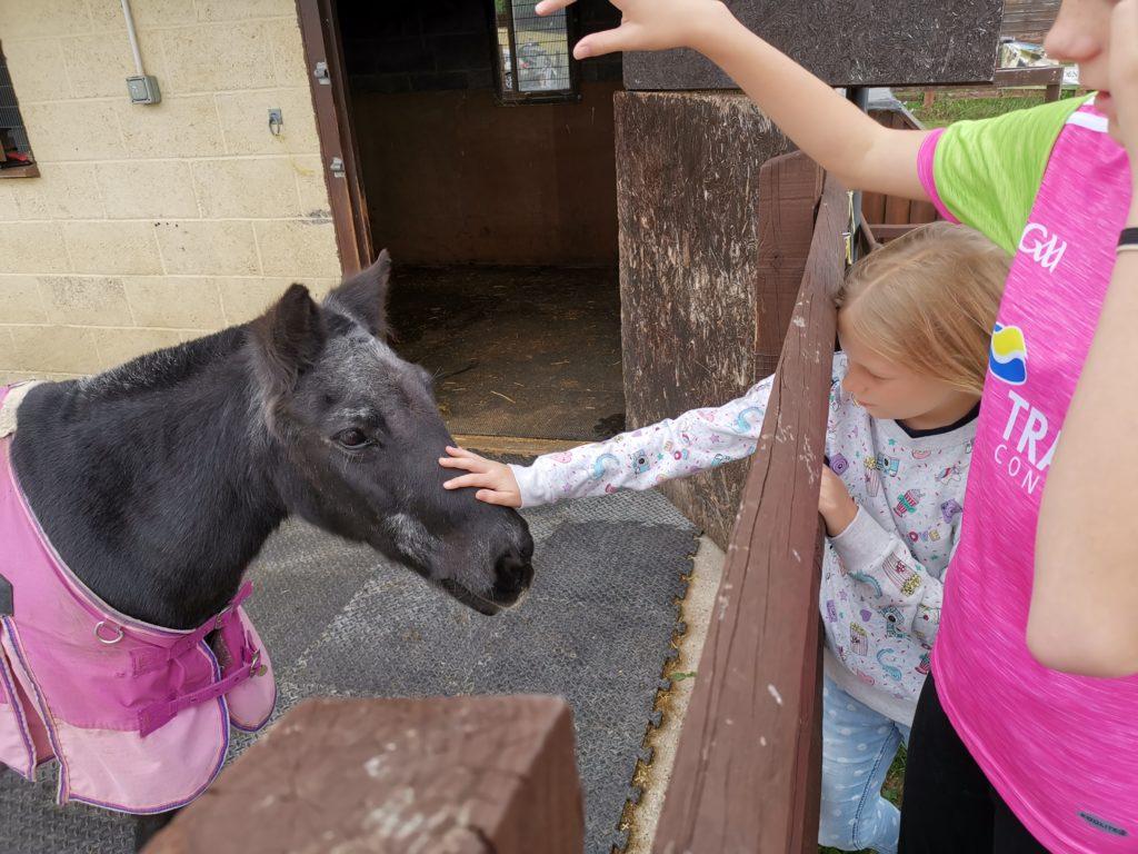 Stroking pony at Trindledown