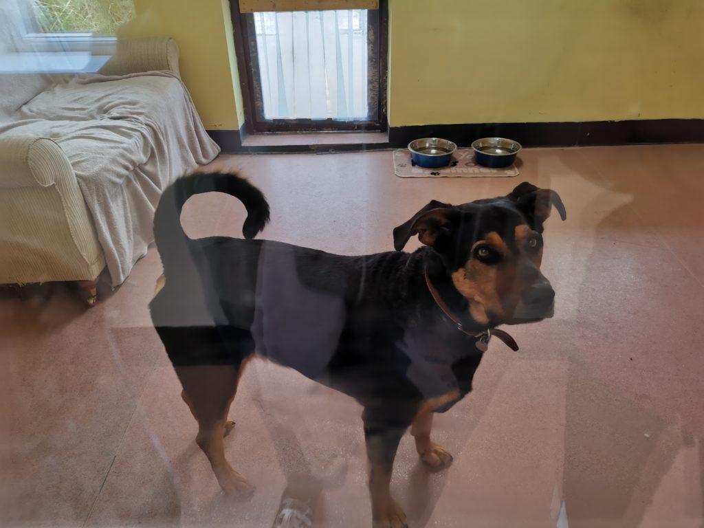 Dog in its indoor pen