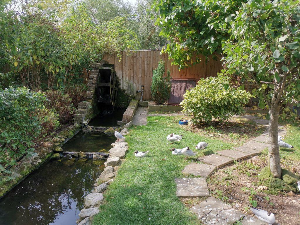watermill garden habitat at tiggywinkles