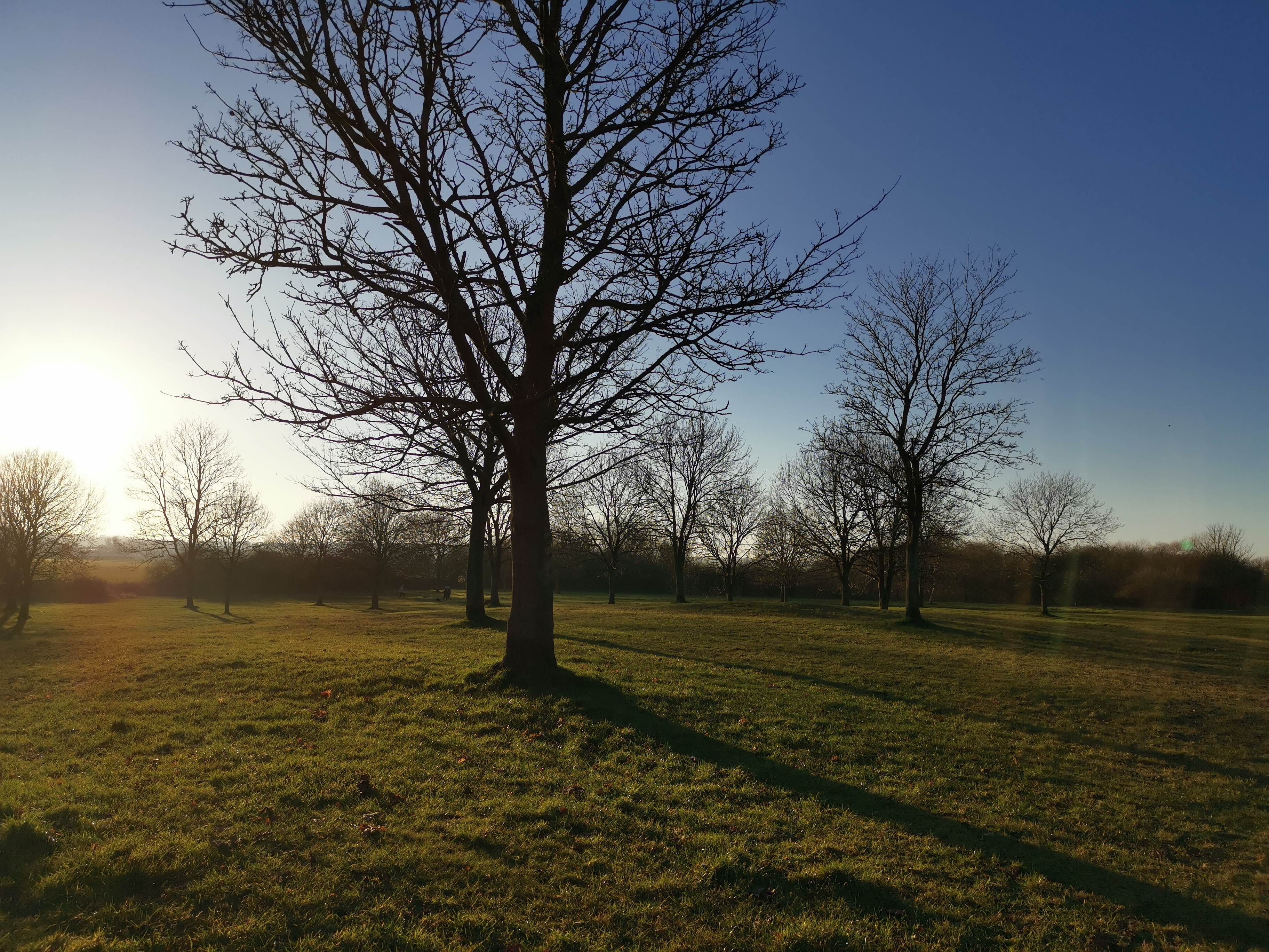 landscape photo with trees, blue sky and green grass