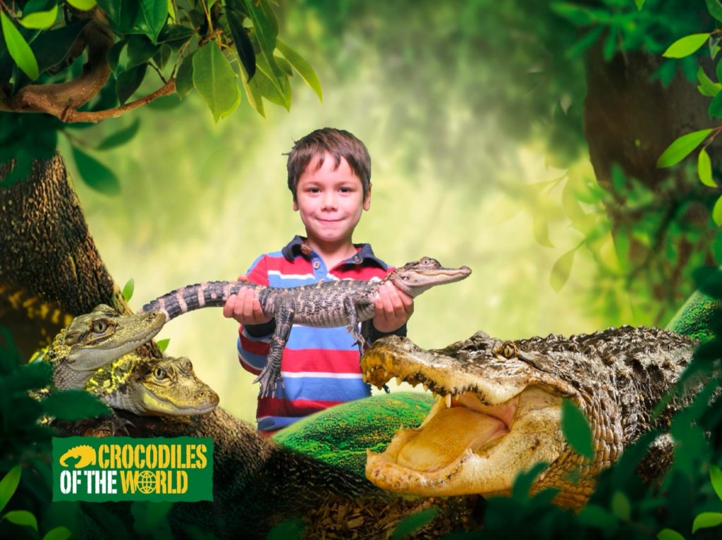 Cody holding 2 year old baby crocodile with green screen background