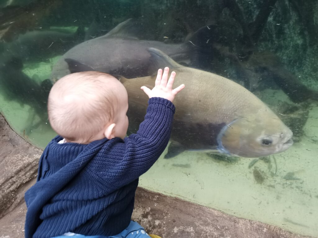 Asa with hand on tank of Amazon piranha fish