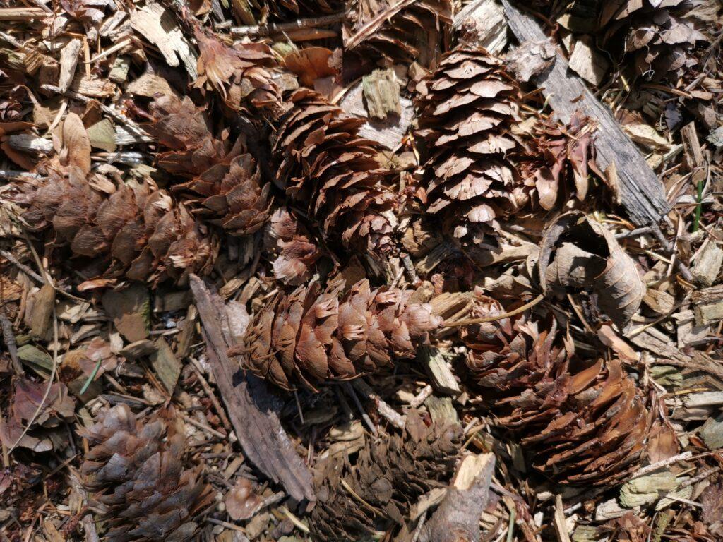 pine cones on floor