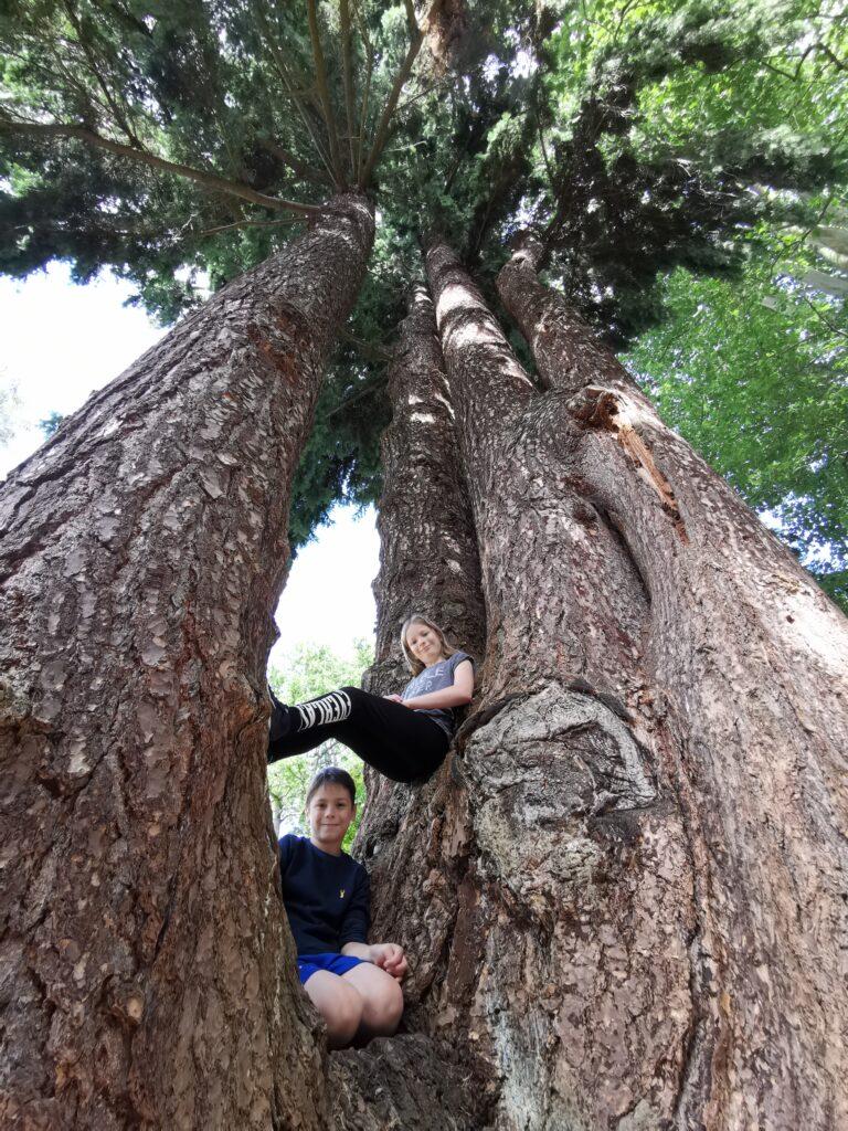 Kids sat in tall pine tree