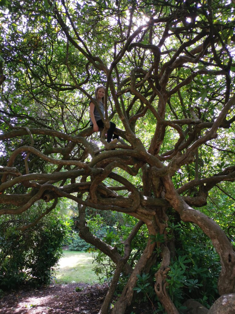 child sat high in twisted tree branches