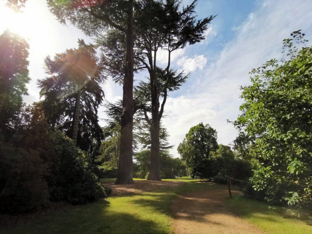parkland at Harcourt Arboretum