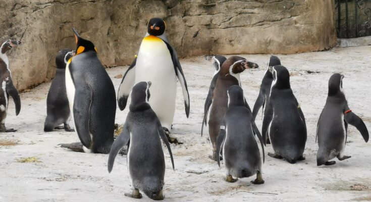 Group of penguins at Birdland