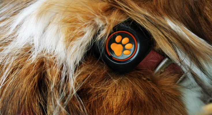 PitPat device on dogs collar surrounded by fur