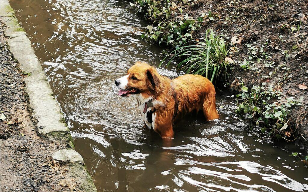 Dog stood in stream soaking wet