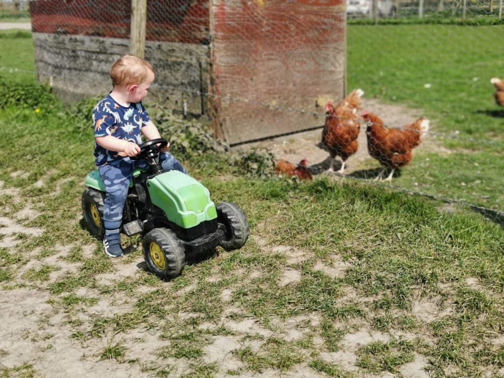 child riding toy tractor next to chickens at The Old Farm Shop