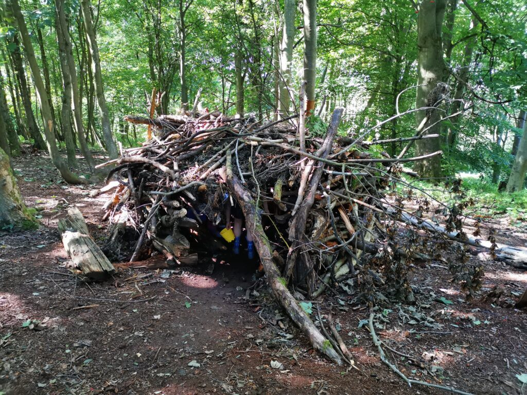 Stick den in the woods at CS Lewis nature reserve