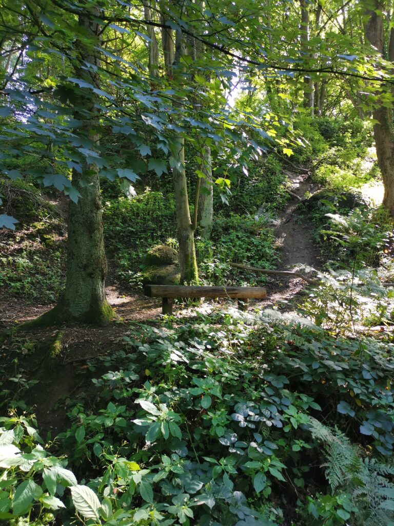 Woodland on steep incline with wooden bench