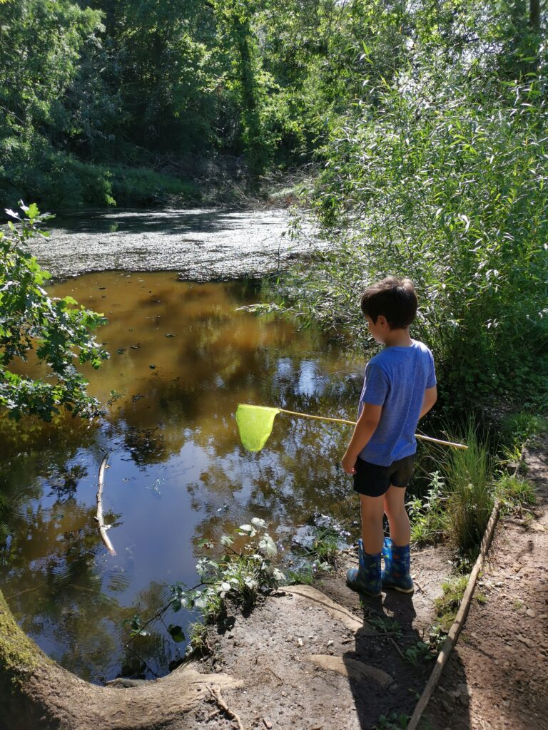 Boy holding net pond dipping at CS Lewis nature reserve